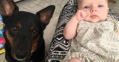 preparare il cane all'arrivo del bebè